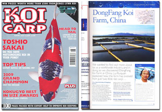 Dongfang koi farm for Koi fish farm near me